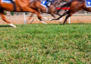Comar apuestas deportivas, Carreras de caballos, Turf